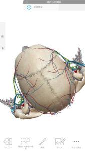 人体頭頂部血管