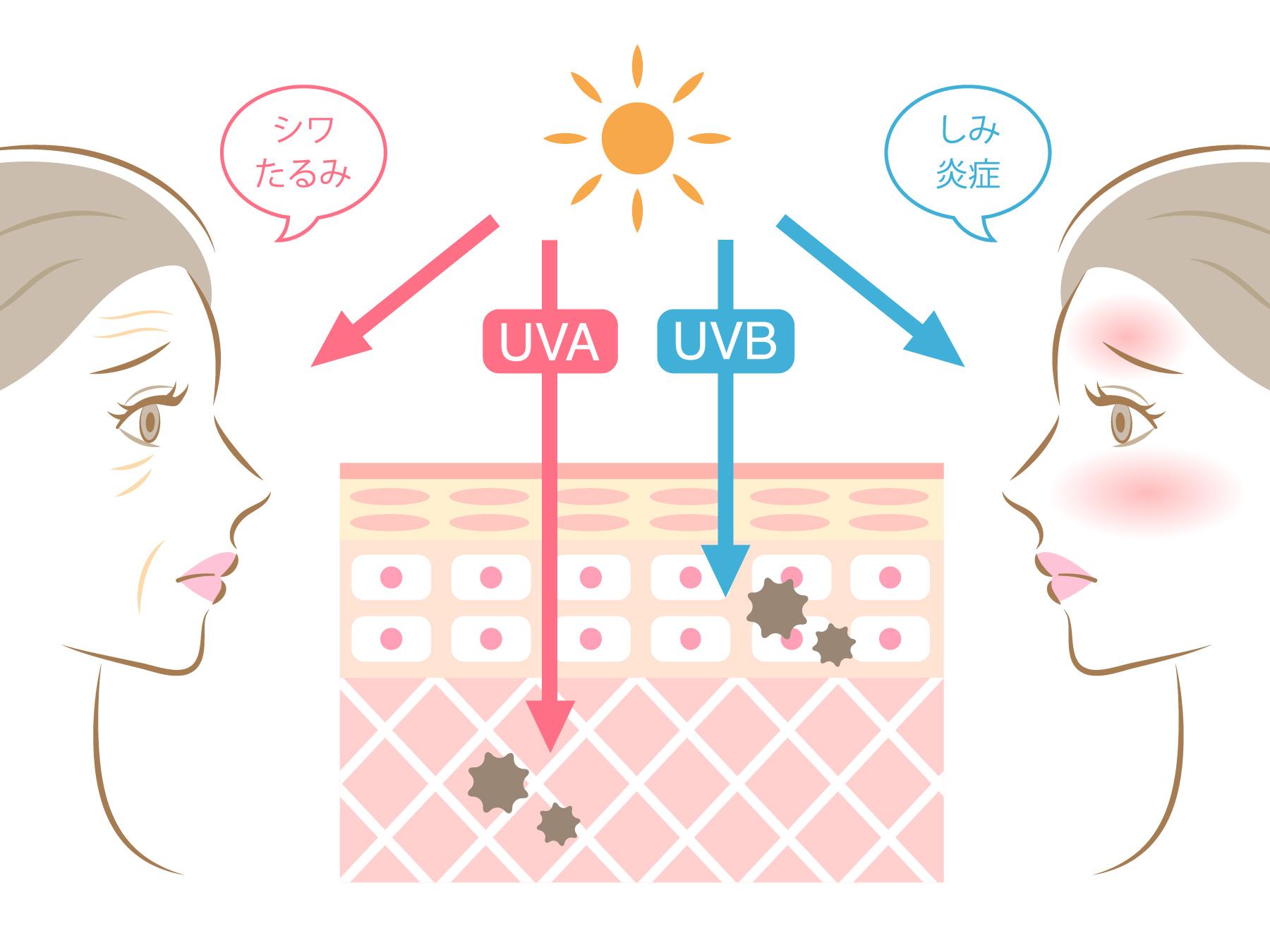 紫外線の影響 真皮まで
