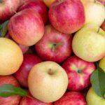 食材総選挙りんご
